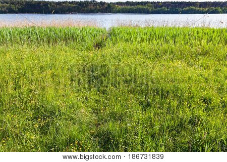 Meadow With Yellow Buttercup Flowers On Riverside