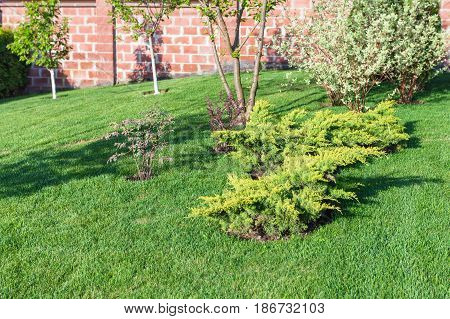 Decorative Bushes And Trees On Manicured Lawn