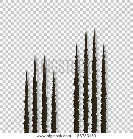 Claws scratches - vector isolated on transparent background. Claws scratching animal cat, dog, tiger, lion, bear illustration. Can be used for decoration, as design element at printing, textile