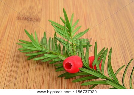 Fresh red yew berries on green twig on bamboo wooden table close up view