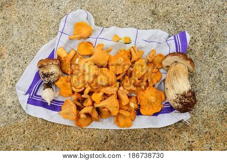 Some ingredients for a stew ready for cleaning and cooking freshly harvested wild mushrooms Chanterelle and Boletus some garlic on clean cloth on stone table