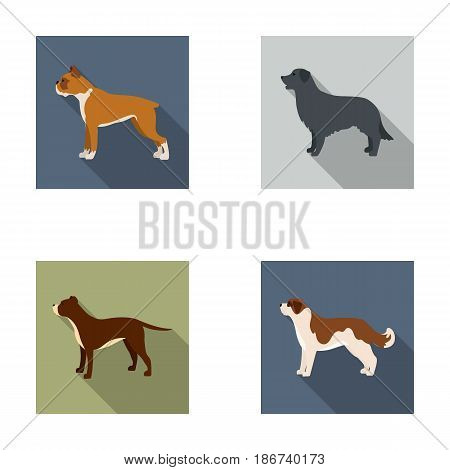 Boxer, pit bull, St. Bernard, retriever.Dog breeds set collection icons in flat style vector symbol stock illustration .