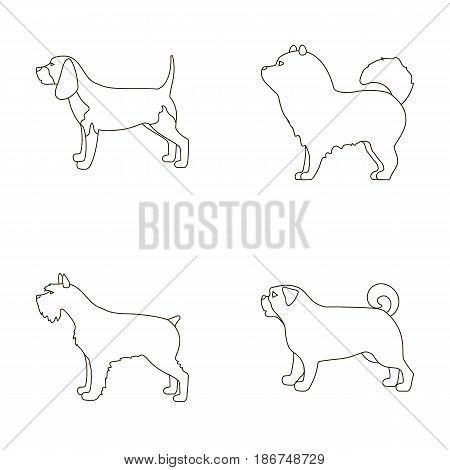 Chau chau, levawa, schnauzer, pug.Dog breeds set collection icons in outline style vector symbol stock illustration .
