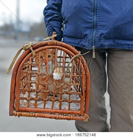 Old rod carrier box rod with nice red kitten carried by man. Cat feels unhappy in cage and wants to get out putting out paw.