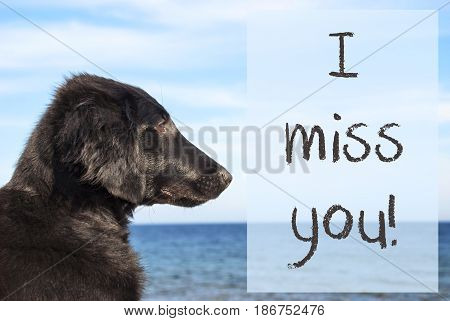 English Text I Miss You. Flat Coated Retriever Dog Infront Of Ocean. Water In The Background