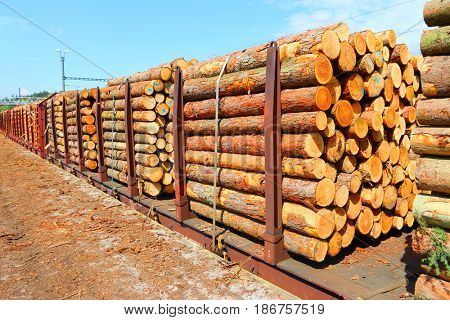 Timber on the freight train. Transportation and sustainable development theme.