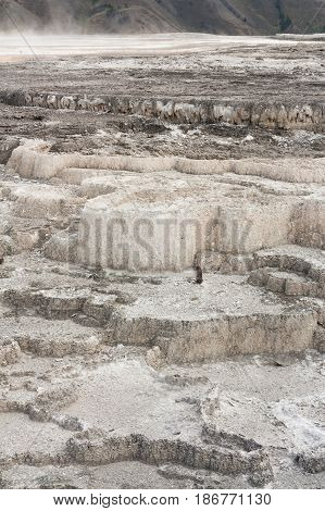 Landscape of the grey terraces of New Blue Spring in Mammoth Hot Springs Wyoming USA.