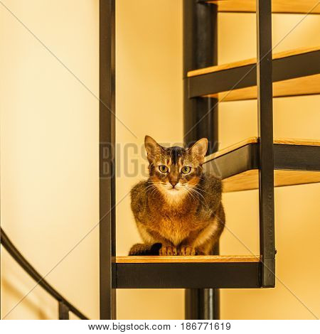 Beautiful cat sitting in the kitchen on a spiral staircase