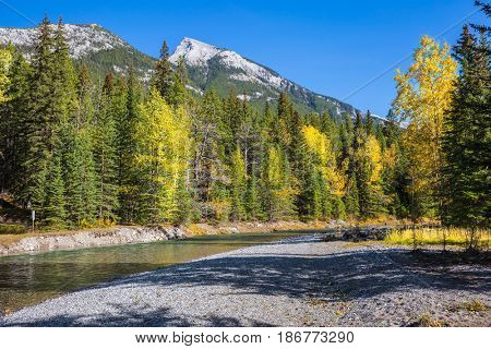 Beneaped creek autumn, surrounded by pine forest. Banff National Park. Canada, Rocky Mountains