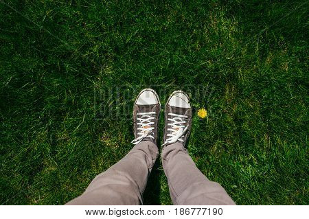 Teenage legs in sneakers and grey jeans standing on lush springtime grass with single dandelion flower top view
