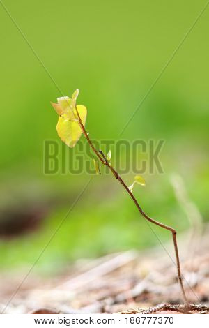 Freshly grown plant in spring time
