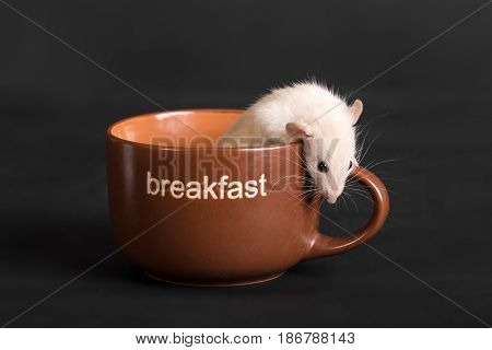 small house rat in a large cup