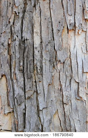 tree bark texture pattern. wood rind for background