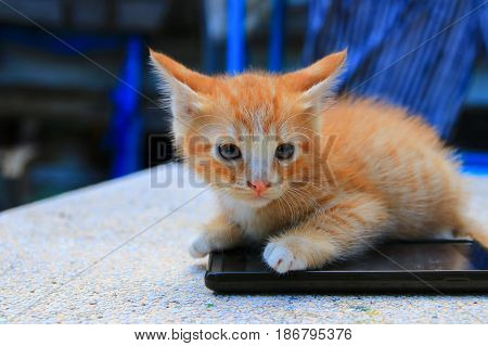 cat paw of kitten orange-red small on cell phone Select focus with shallow depth of field