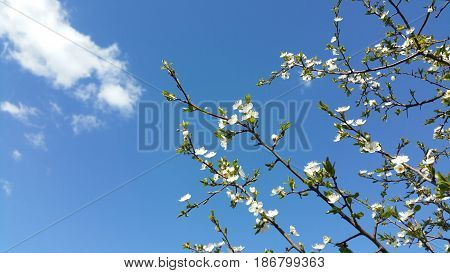Beutiful spring flowers with blue background and clouds
