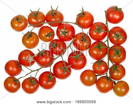 Branches of cherry tomatoes isolated on white background