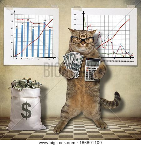 The cat trader is holding a bunch of money in one paw and a calculator in other. There are some charts on the wall.