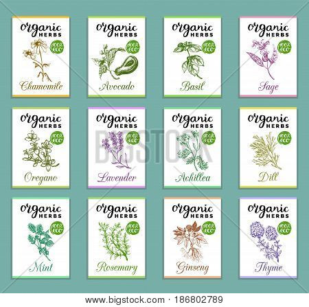 Herbs and spices cards set. Hand drawn medicinal, cosmetic plants collection. Engraving botanical illustrations tags. Vector healing wild flowers sketches for labels.