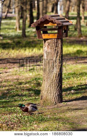 Wooden bird feeder on the sawn wood