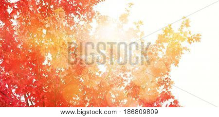 Glowing background against low angle view of autumn tree