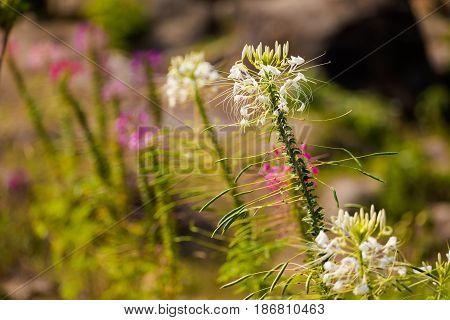 Plant Closeup In Pai Village