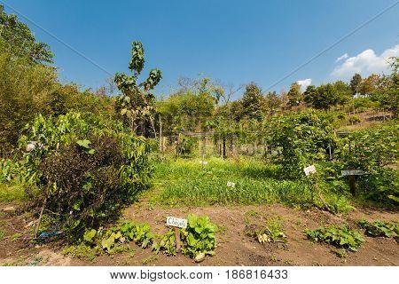 Traditional Thai Garden For Tourist