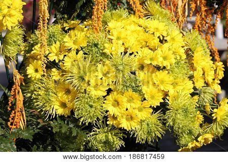 Various bright yellow flowers in composition Thailand Southeast Asia