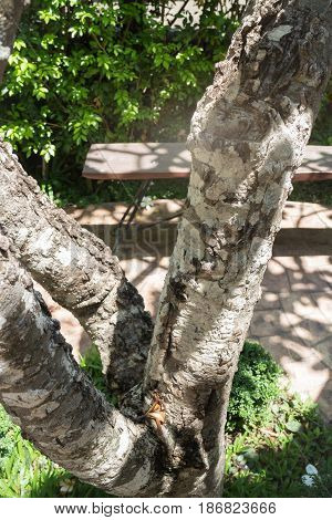 Bark Tree In Summer Garden stock photo