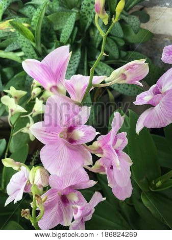 Beautiful Purple Orchid Flower Tree stock photo