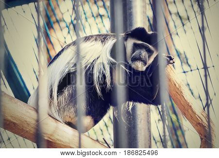 Sad Monkey Sitting In A Cage With His Back To The Tree Branch.
