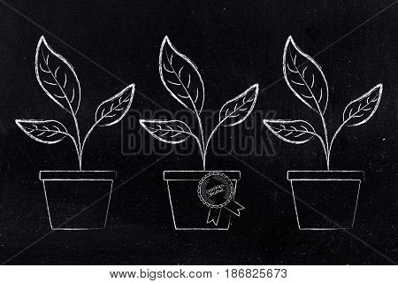 Plants In Vases And One With Plants In Vases And One With Badge