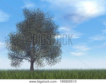 American beech tree by day - 3D render