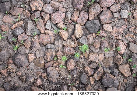Natural Background With Grass, Gravel Texture And Stones. Horizontal Frame
