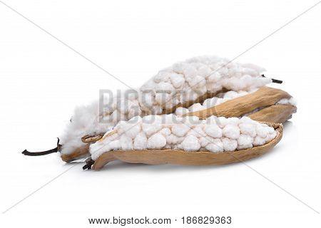 White silk cotton(Bombax ceiba) isolated on white background