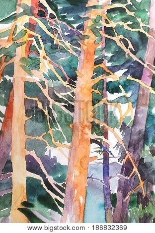 Watercolor pine forest background, trunks of the trees illustration