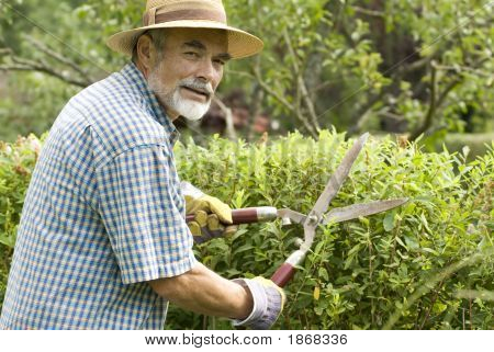 Clipping A Hedge