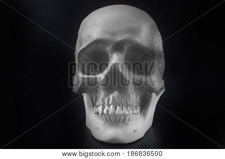 Skull in black background image close up