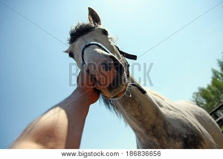 Man hand stroking horse on the nose