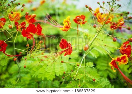 Exotic Red Flower Background