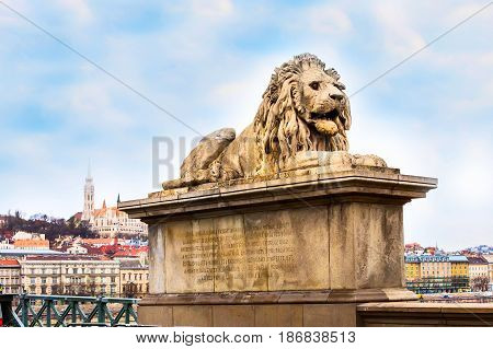 Lion statue at the Chain bridge, Budapest, Hungary. Buildings of Buda part on the background