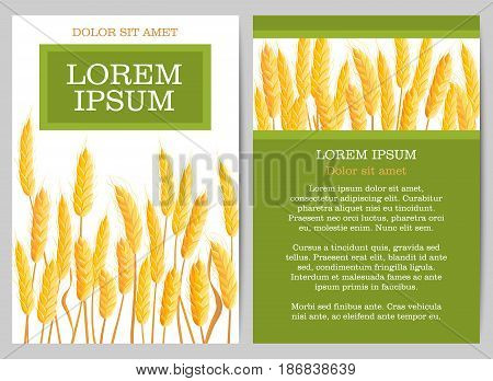 Natural agricultural concept with wheat ears and space for text. Organic local farming banner, healthy and natural agriculture. Farm company background, bakery shop design vector illustration.