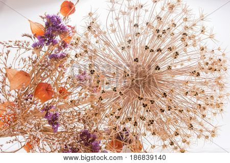 Closeup bouquet of dried flowers as background