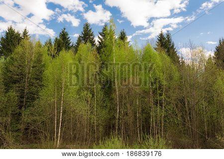 Prairie Landscape And Sky