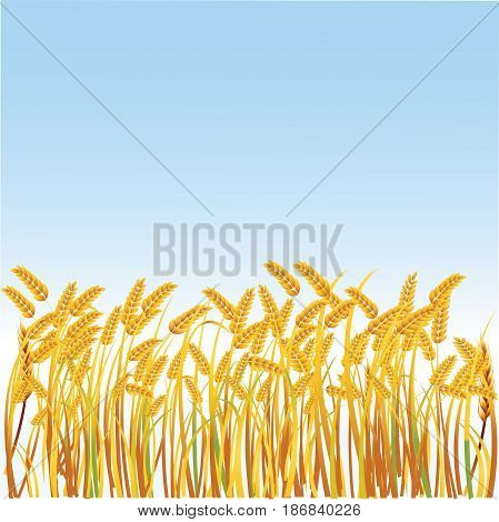 Illustration of a field with realistic spikes on a blue background