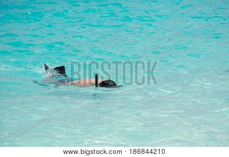 A man He is snorkeling in Crystal clear water and looking to under water at Similan Island Andaman Ocean Thailand A most popular island in Thailand
