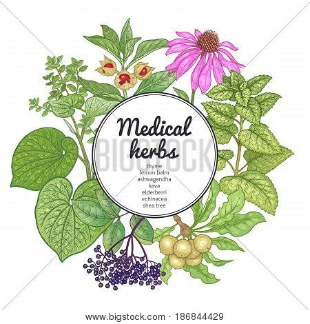 Medical herbs plants and place for inscription. Vintage engraving. Hand drawing on white background. Colorful card. Vector illustration for design texts covers and posters of alternative medicine.