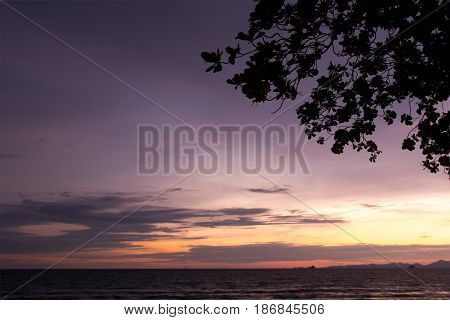 Backlit branches and purple and yellow sky and sea in evening time