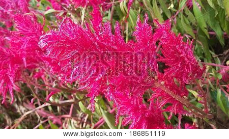 Indonesia flower at hutan pinus jogjakarta pine