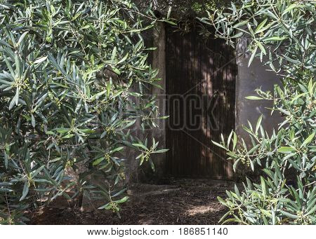 old Spanish shed hidden in the olive groves where the farmers would rest from the  hot sun, showing a close up of the door way,