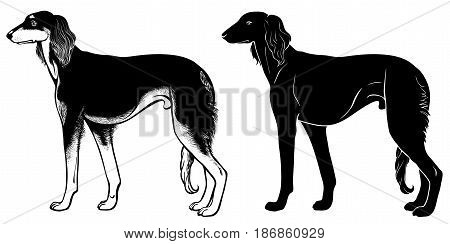 Saluki Hound set 2 - - outline and silhouette vector